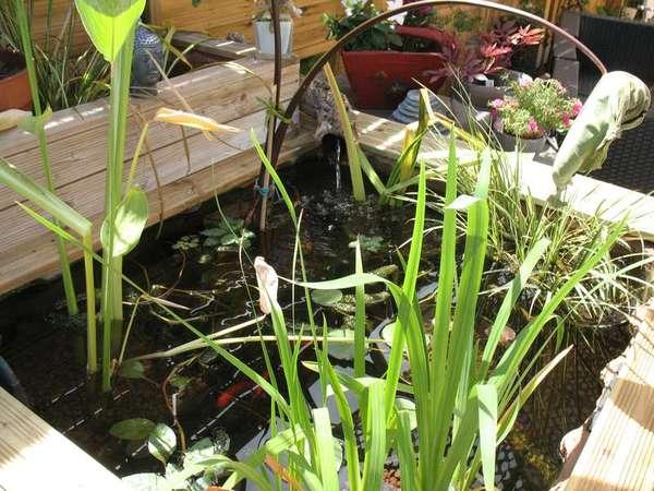 Le petit bassin hors-sol de Patrice_b. - Page 4 Bassin_8_aout_3