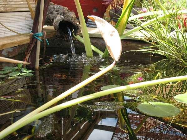 Le petit bassin hors-sol de Patrice_b. - Page 4 Bassin_8_aout_4