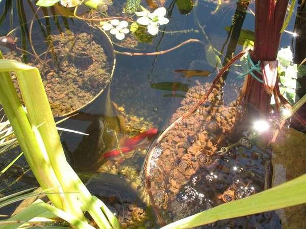 Le petit bassin hors-sol de Patrice_b. - Page 4 Bassin_8_aout_6