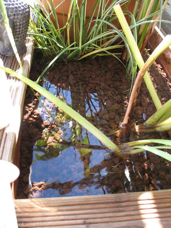 Le petit bassin hors-sol de Patrice_b. - Page 4 Lagunage_1