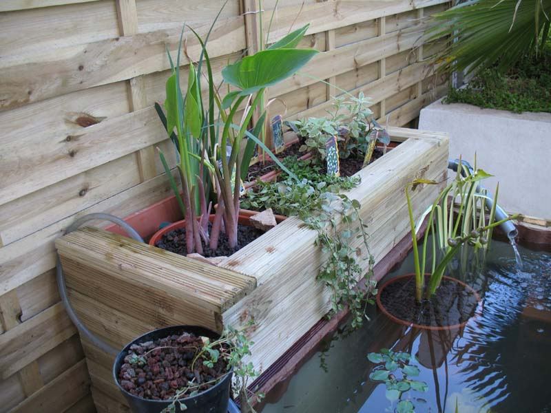 Le petit bassin hors-sol de Patrice_b. Bassin_jard_3