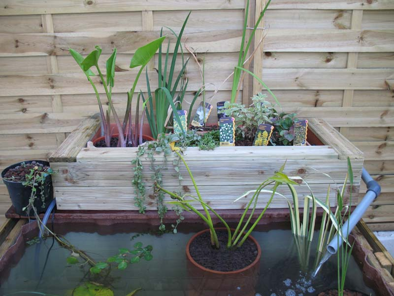 Le petit bassin hors-sol de Patrice_b. Bassin_jard_4