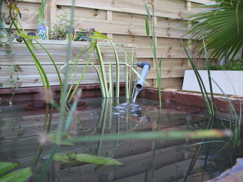 Le petit bassin hors-sol de Patrice_b. Bassin_jard_5